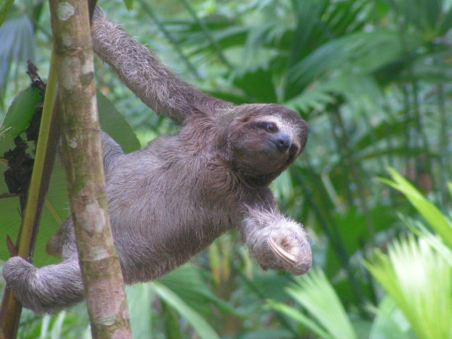 type of sloths